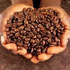 Roasted Coffee Grains